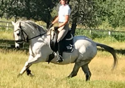 Cuervo Gold Hand Canter